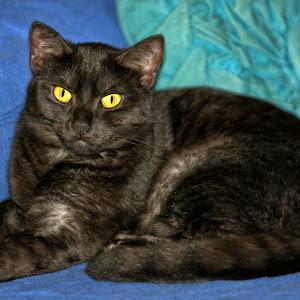 Smokey Black Cat Portrait.jpg