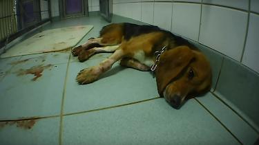 Fotograma del vídeo en el que se ve a un perro moribundo.