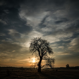 Sun and the old tree by Donea Razvan - Landscapes Forests ( sky, tree, shadow, sunrise )