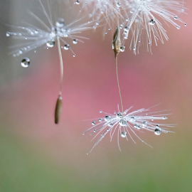after the rain by Ad Spruijt - Nature Up Close Other plants