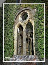 Photo: Abbaye de Villers