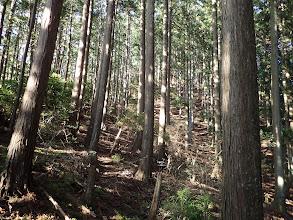植林の中を進む