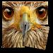 Animal Puzzle Game icon