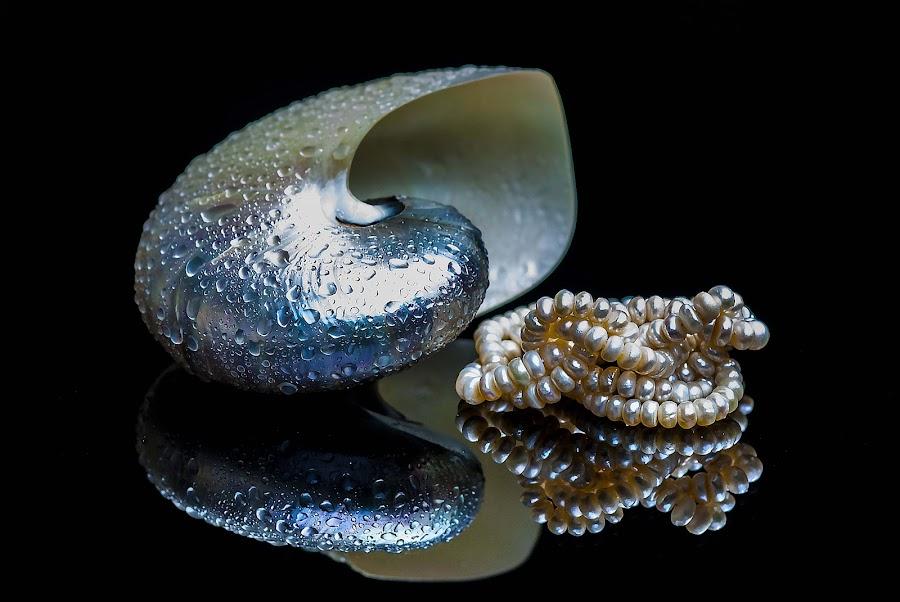 pearl & nautilus by Adjie Tjokrosoedarmo - Artistic Objects Still Life (  )