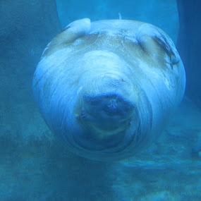 by Darrin McNett - Animals Sea Creatures ( pt. defiance zoo, zoo, walrus,  )