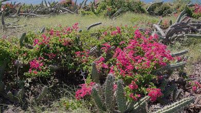 Photo: San Miguel bloom among the Pitaya Agria