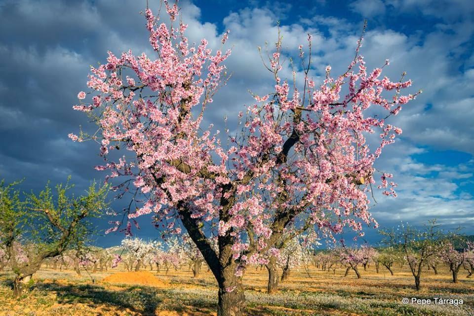 La imagen puede contener: árbol, cielo, nubes, planta, exterior y naturaleza