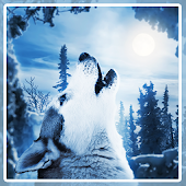 Wolf Husky Winter LWP
