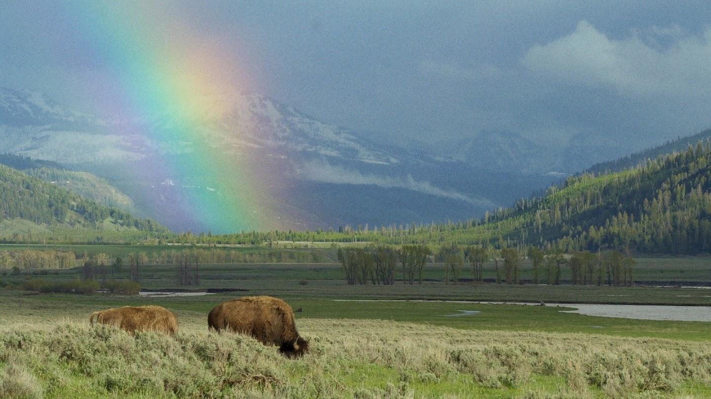Watch Epic Yellowstone live