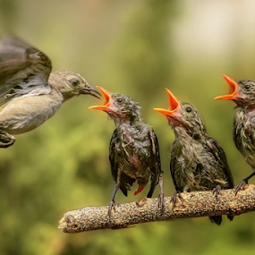 Keep Calm and Wait For Your Turn by Husada Loy - Animals Birds (  )