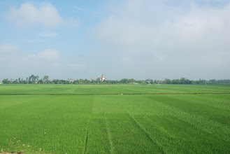 Photo: A paddy field on the way to my village. For many years I worked on fields like this one. Love the green, it looks like many satisfying meals.