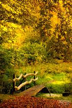 Photo: Autumn Colors, 2011