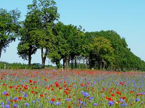 Photo: So mag man's: Alleen und bunte Blumen