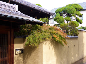 Photo: Prettiest residential street (Nara)