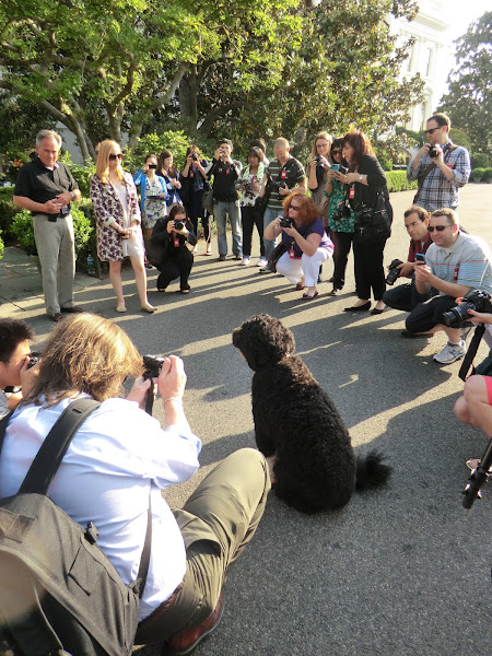 Photo: #bothefirstdog First Dog looking at his official caretaker Dale Haney. Bo is unfazed with the all G+ photowalkers surrounding him. Very well trained!