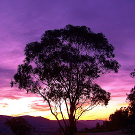 Connors Lookout by Sarah Harding - Novices Only Landscapes ( tree, silhouette, sunset, novices only, landscape )