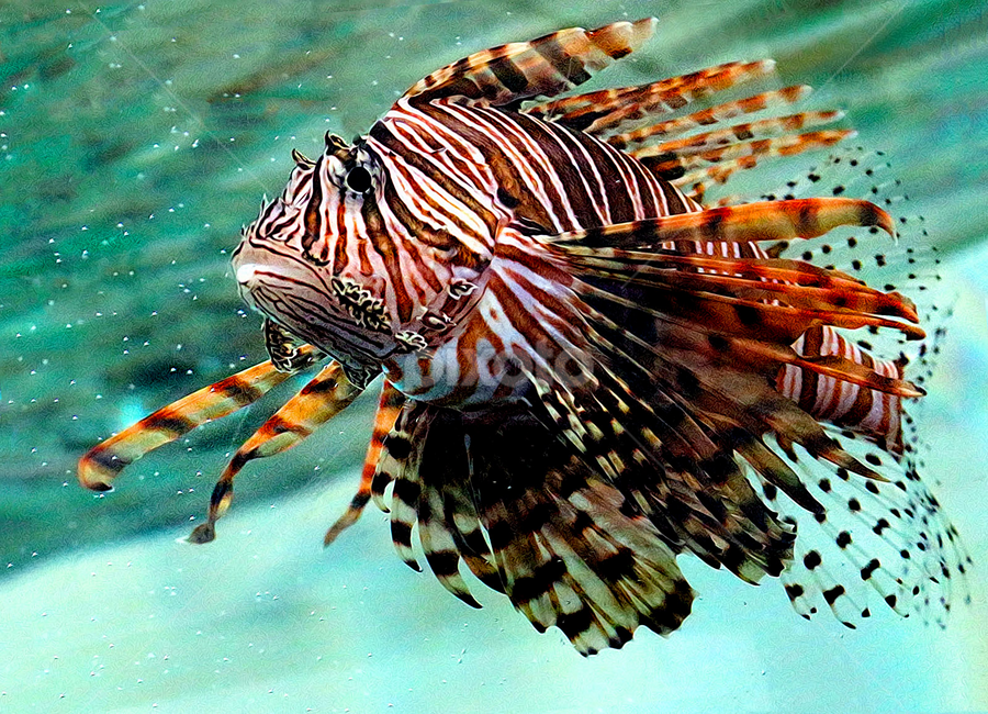 by John Larson - Animals Fish