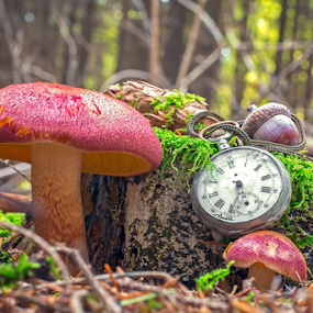 The passing of time by Roberto Sorin - Artistic Objects Still Life ( mushroom, old, wood, ground, retro, aged, close, time, tree, nature, autumn, vintage, watch, green, silver, image, forest, toned, bunchers, pocket, trunk, red, background, outdoor, dust, scene, view, down, passing, antique, natural,  )