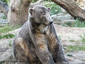Photo: Jetzt muss Knut sich erst einmal setzen ;-)