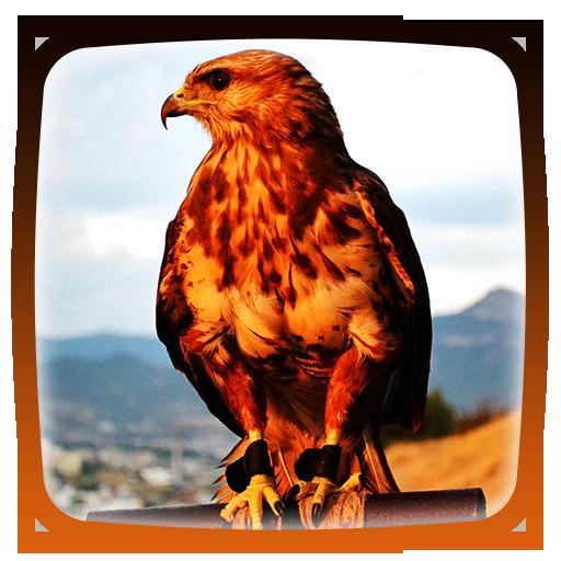 Hawks Live Wallpaper
