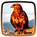 Hawks Live Wallpaper icon