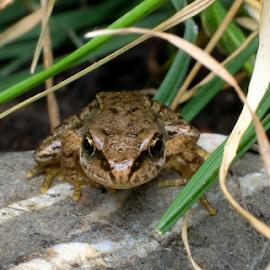 by Dina Dee - Animals Amphibians