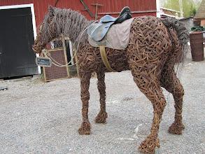 Photo: Oikea hevonen kauempaa katsottuna.