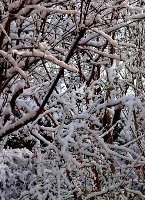 ricami di neve di stefanotag