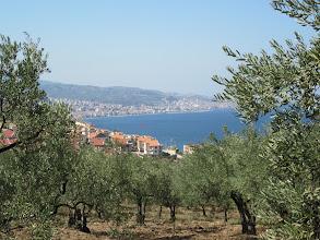 Photo: La spécialité locale l'olive. Au fond mudanya et la mer de marmara (bien trop froide pour s'y baigner!).