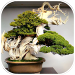 200 Bonsai Design Ideas Icon
