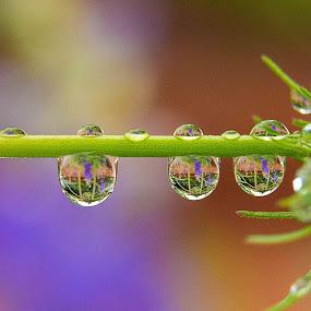 by Jay Stout - Nature Up Close Natural Waterdrops (  )