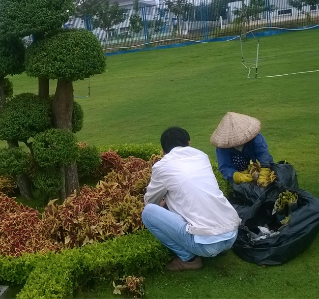 Dịch vụ chăm sóc cây xanh uy tín chuyên nghiệp