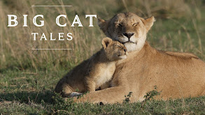 Big Cat Tales thumbnail