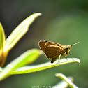 Swift Hopper