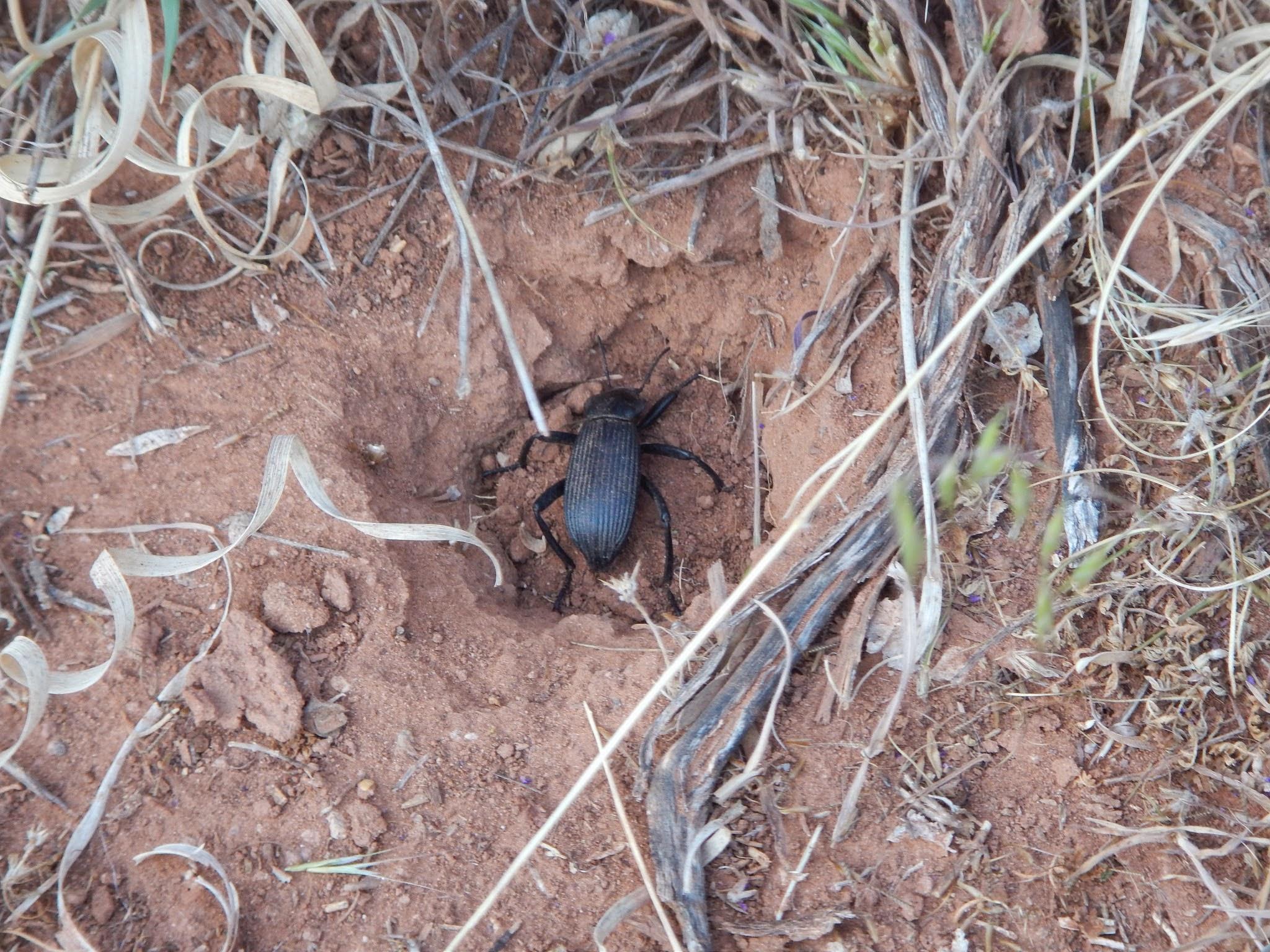 Photo: Beetle!
