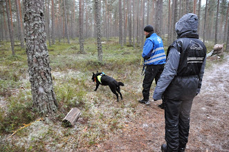 Photo: Jan Ståle og Kveåhagen's Black Boo