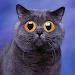 Funny Cats Wallpaper Icon