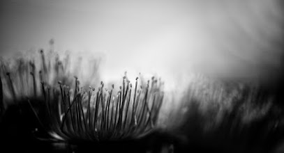 Photo: #bwphotography  #floralfriday  #flowerphotography +HQSP Flowers+HQSP Monochrome