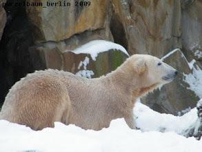 Photo: Kurze Pause im Schnee :-)