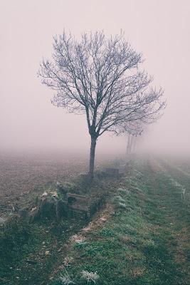 Nebbia di ZERRUSO