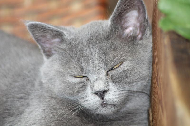 Gatto Sornione di iper82