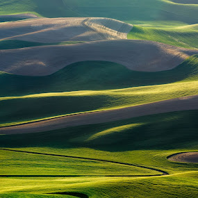 Palouse Afternoon by Sandra Woods - Landscapes Mountains & Hills ( hills, washington, palouse, green, spring, steptoe butte,  )