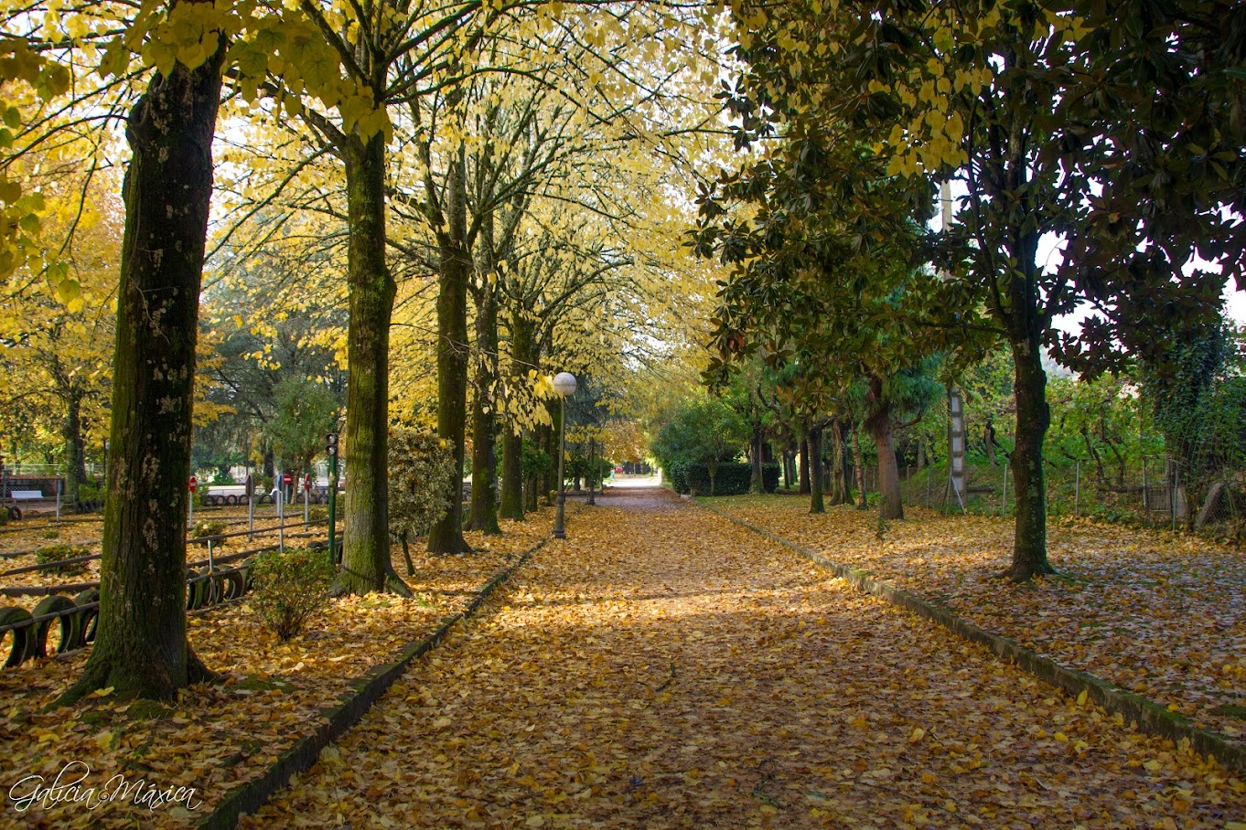 Paseo otoño