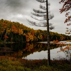 Small Fall Colors Lake  by Michael Haagen - Landscapes Forests ( forest, fall colors, fall, reflections, lake,  )
