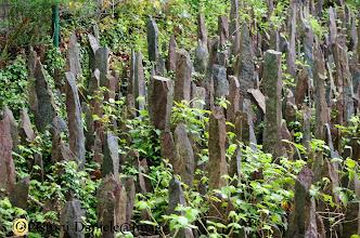Photo: Foresta di Broceliande