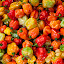 Chillis by Antony Sendall - Food & Drink Fruits & Vegetables ( orange, peppers, red, market, chillis, vegetables, hot, scotch bonnet, brightly coloured, bright colours, green yellow )