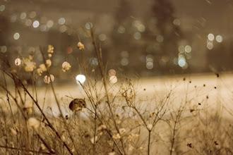 Photo: Freezing...  I found this small mouse outside when it was snowing a lot... Cute :D  雪の夜にブルブル震える子ネズミ発見 #PlusPhotoExtract