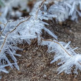 Last Frost by Lauren DeJarnatt Yoder - Nature Up Close Leaves & Grasses ( grass, frost, spring,  )