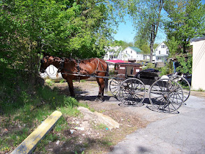 Photo: Amish Horse & Buggy Hitched up in Alex Bay