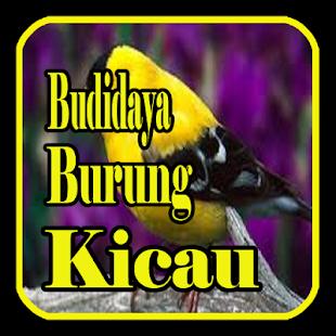 Budidaya Burung Kicau - náhled